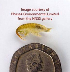 'Killer' shrimps invade British Waterways