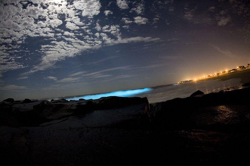 800px-Bioluminescent_dinoflagellates