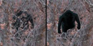 Bigfoot:Big Rumpus!