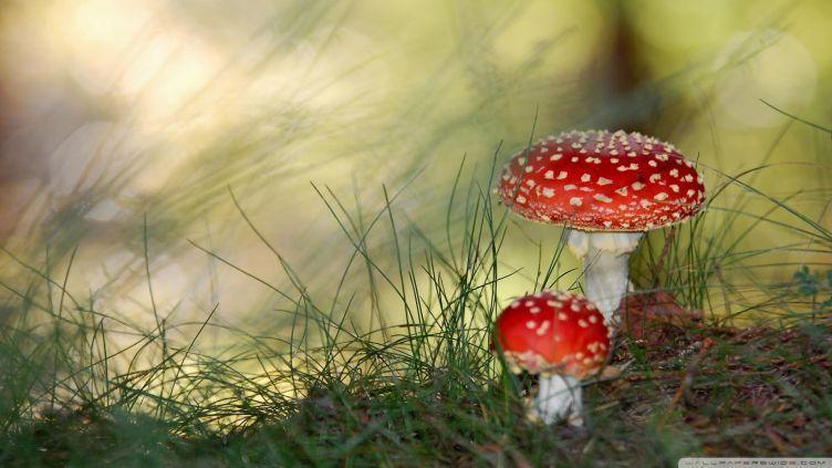 'Shrooms Prove Previous Lives